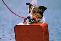 Dog Travel / Go, Dog! Go!