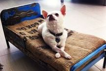 Dog Beds We'd Sleep In / Great ideas and super wow designs to inspire...