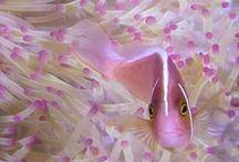 Poissons et aquariums / Aquariophile passionnée depuis plus de 2 ans, je cherche à en découvrir toujours plus alors si vous êtes comme moi, suivez moi!