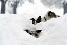 Woof-Woof Winter