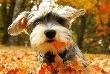 Pumpkins and Pups