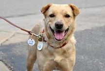 My Dog is a Sidewalk Dog / Sidewalk Dogs we know and love: Cover Dog Contest winners and runners-up, Almost Famous dogs from our blog, Special Dogs Seeking Special Homes, foster dogs and adoption successes. Be part of the community and share your story with us!