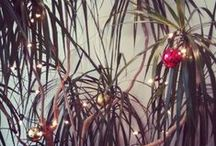 a tropical christmas / ideas for celebration, entertainment , decor + gift giving