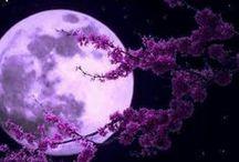 Stregata.......dalla luna ○ / Starei ore a guardarla......... / by ♡Ely♡