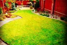 Small Garden (Mały ogród) / Garden