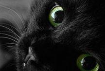 Black♣