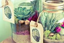 TerrAniuMs / mini garden / by Marisol Navarro