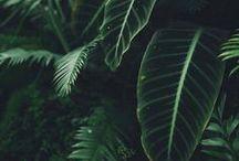 Plants & green things