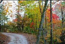 Seasons at Elkin Creek Vineyard