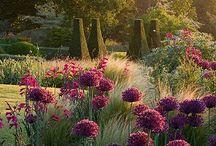Garden / Ideas