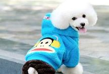 I love poodles!!!!!!!!!!!!!!!!!!!!!!!!!!!!!!!!!!!!!!!!!!!!!!!!!!!!!!!!!!!!!!!!!!!!!!!!!!!!!!!!!!! / by Smooch