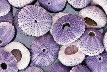 Mauve ~ Lilac – Purple
