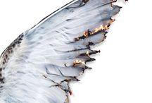 Supernatural / general aesthetics for the Supernatural TV series