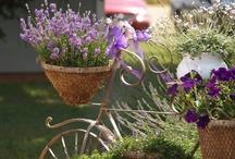giardini e idee per esterni / by feo didi