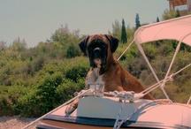 Il boxer - il cane che mi ha rubato il cuore / by feo didi