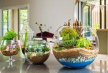 hobi / hobi,plants,house,miniature,minyatür,mini garden,