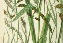 GRASSES - PALMS - FERNS / Mostly drawn, painted, etched illustrations.