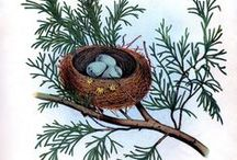 BIRDS and BIRD NESTS / All drawn or painted pictures of birds in art.