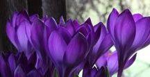 Colour; Purple