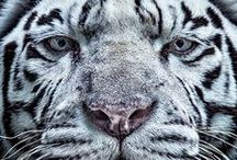 Animal Mania (Photo)