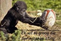 Afrikaanse grappe / Afrikaanse grappe