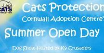 Cats Protection Dog Show 2017 / Judge - Holly Caesar Clifton Villa Vet Nurse