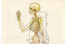 Vintage anatomical