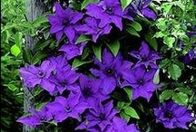 Purple! / For me, purple is the one true color! This is the place I go for Purple.
