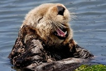 Animals - Otters! / This is the animal I would LOVE to be!