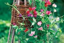сад\огород