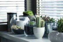 DECORAR CON PLANTAS / Decoracion con plantas, decorar maceteros, y como hacer composiciones con ellas