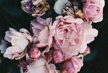 B O T A N I C A L . G O O D N E S S / You belong among the wild flowers
