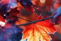 Seasonal: Fall - Herbst / Herbstliebe - wenn sich das Laub färbt, die Tage kürzer werden und ganz besondere saisonale Leckereien warten entdeckt zu werden / Autumn love - when the leaves color, the days become shorter and very special seasonal treats are waiting to be discovered