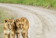 Animals / African animals / by Elaine Harms