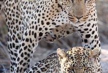 Animaux / Photographies d'animaux sauvages en liberté