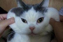 ✿ meow meow ✿