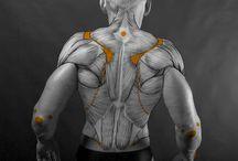anatomy, sketh & tutorials