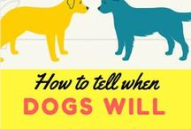 How to Tell When Dogs Will Fight