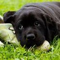 How to Correct Inappropriate Dog Chewing?