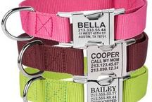Personalized Nylon Collars / Custom engraved nylon collars with a strong metal buckle.