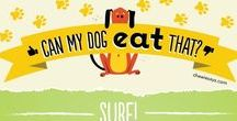 What can your DOG eat? / Find out about healthy dog food.