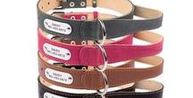 Large Breeds Dog Collar with a Handle / Large and Extra Large Sizes