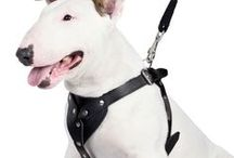 Pulling Dog Harness / A leather dog harness is meant for medium and large sized dogs.