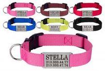 Personalized Nylon Dog Collar