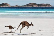 My Australia / Beautifull places where i`ve been in Oz! Amazing animals what i saw!