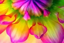 COLOR   Rainbow