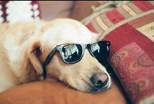 Doggies  / I'm a dog person.  / by Caroline Lambert