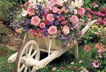 Plantas,flores e jardins! / Um espetáculo da Natureza!