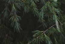 Christmas Cheer / by Kimberly K