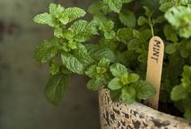 Herb* & Spice* Garden / Herbs & Spices / by Katsue Watanabe
